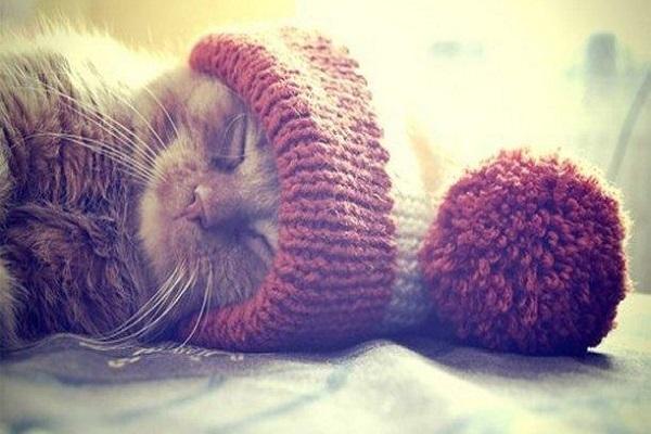 gatto con cappello di lana