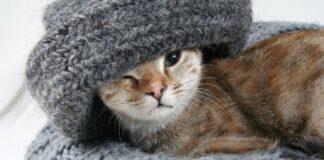 gatto con sciarpa in testa