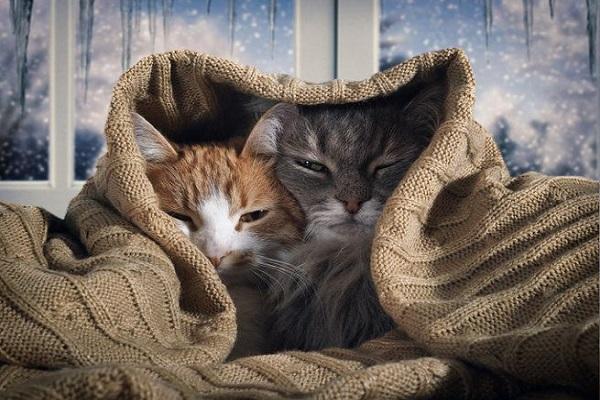 gatti sotto coperta