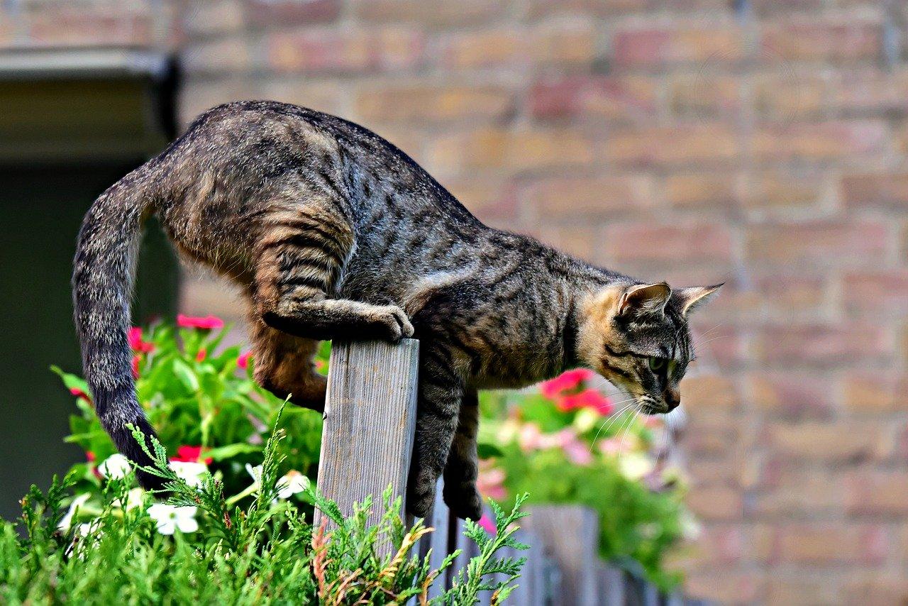 gatto-caccia-mosche