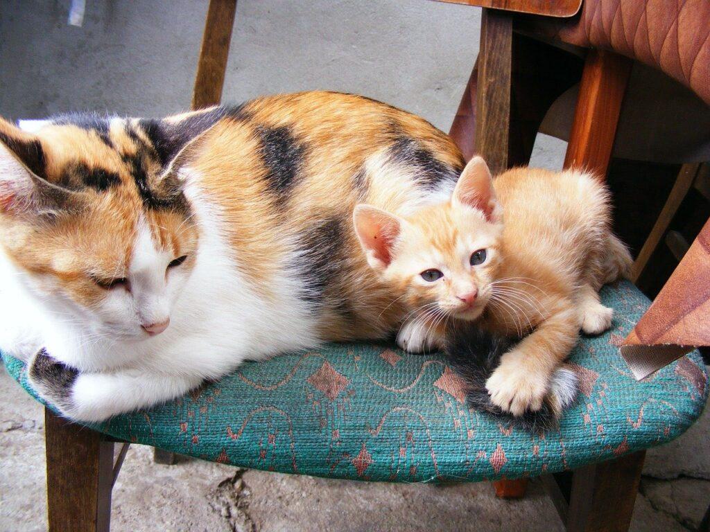 gatto-convivenza