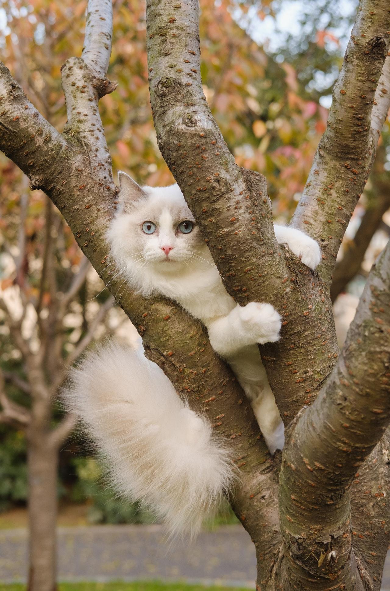 gatto-cuccia-giardino