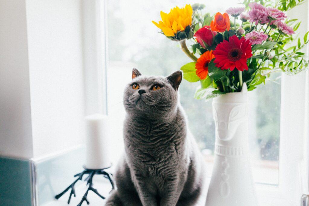 gatto-docile