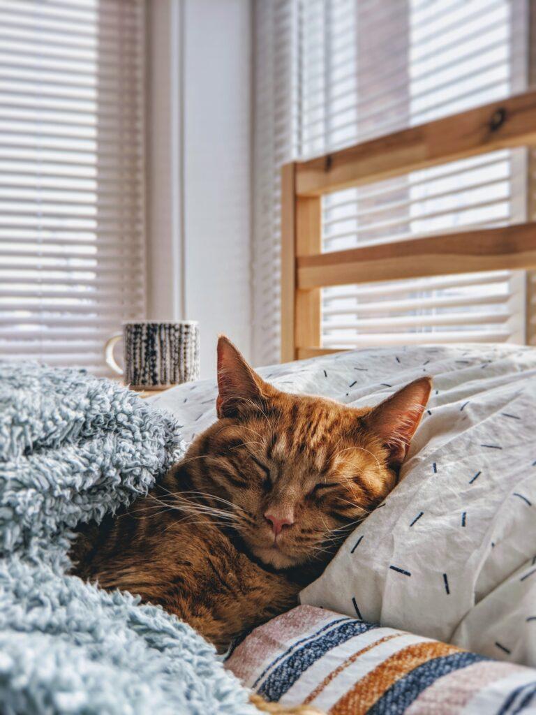 gatto-dorme