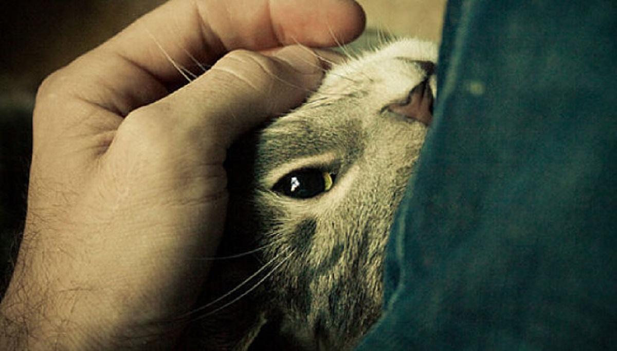 gattino accarezzato primo piano