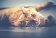 gatto-non-mangia-cosa-fare