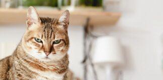 gatto restio al contatto umano