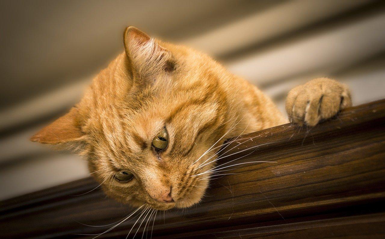 gatto-rifiuta-cibo