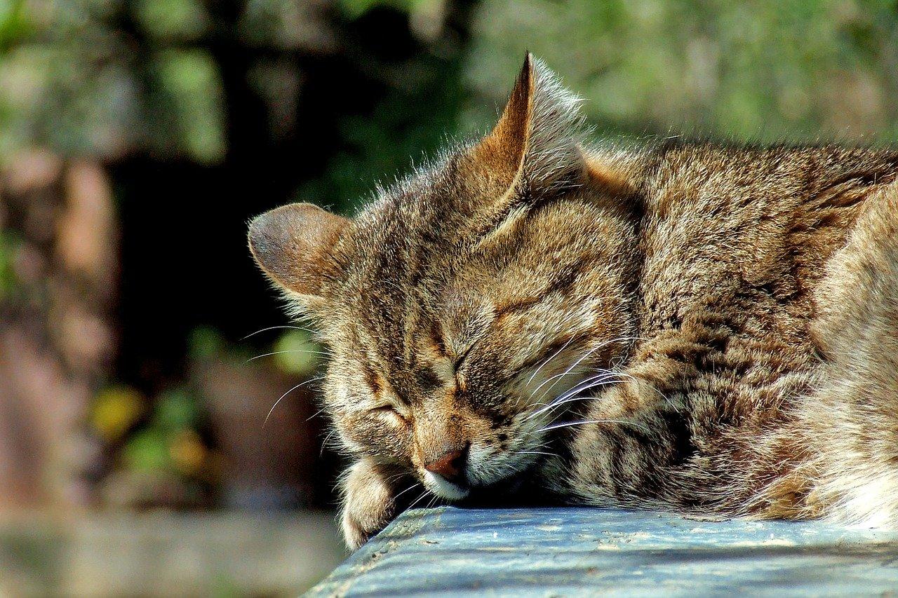gatto soriano che dorme