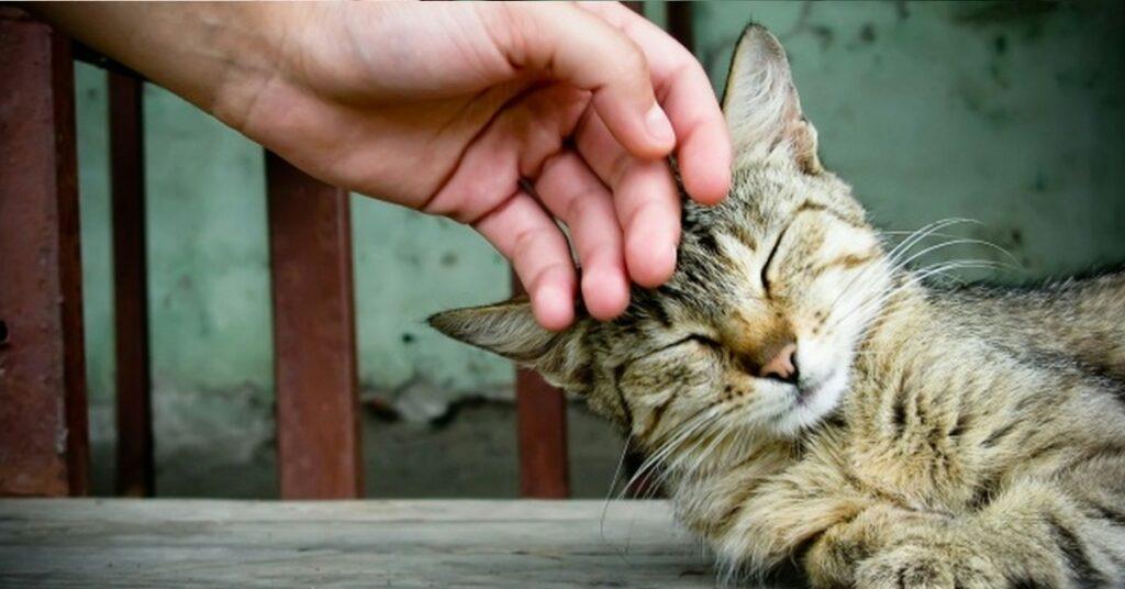 gatto accarezzato sulla testa
