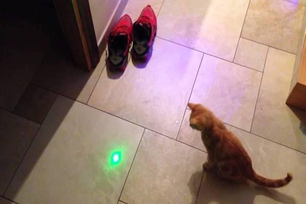 gatto che fissa la luce laser
