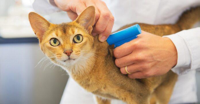 pistola per microchip gatto