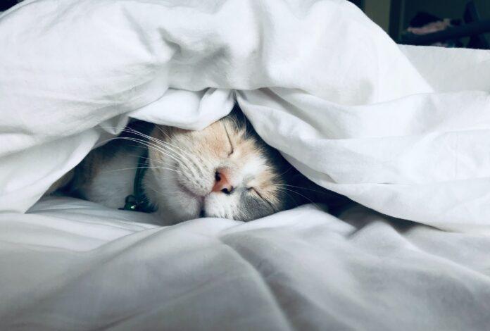 nomi-gatti-femmina