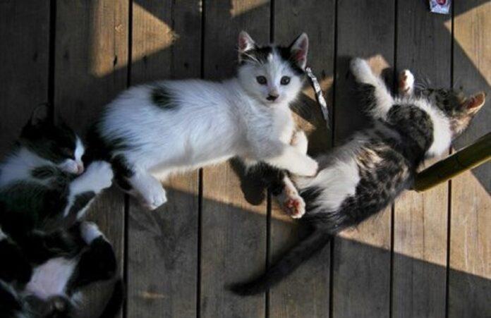 gattini distesi su pavimento di legno