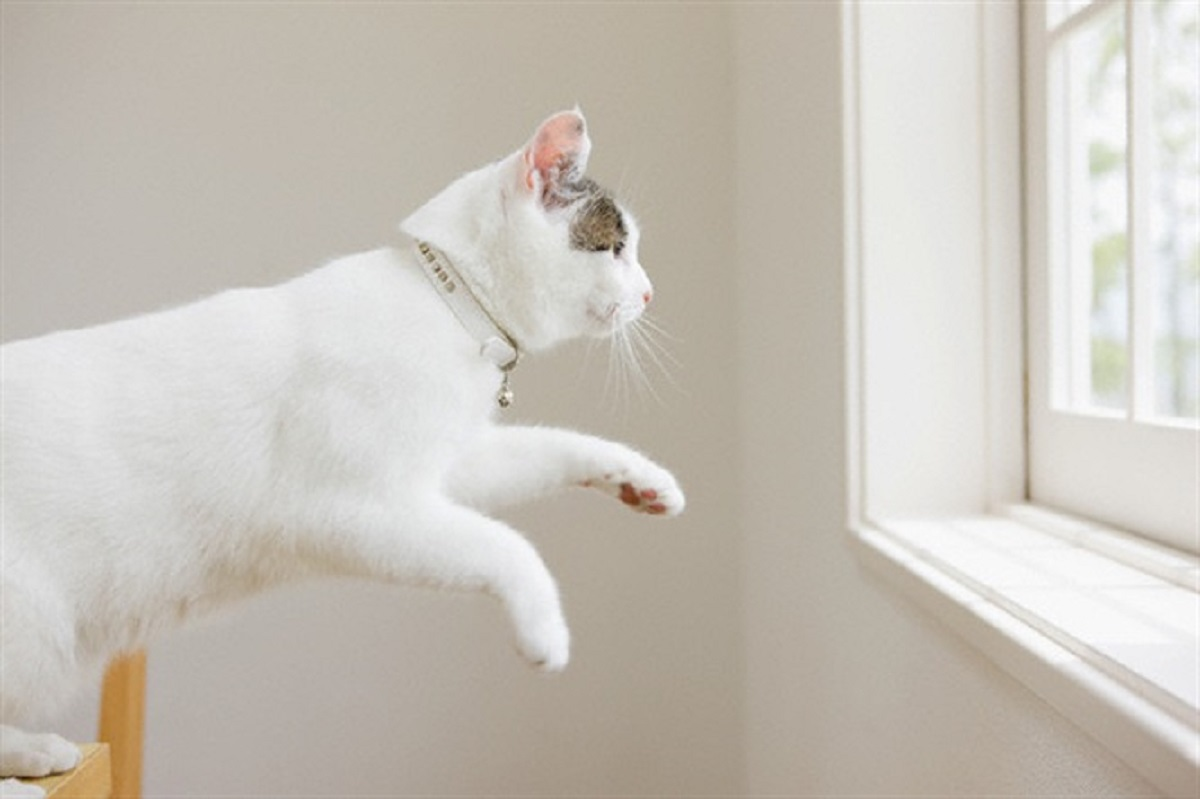 gatto bianco salta verso una finestra