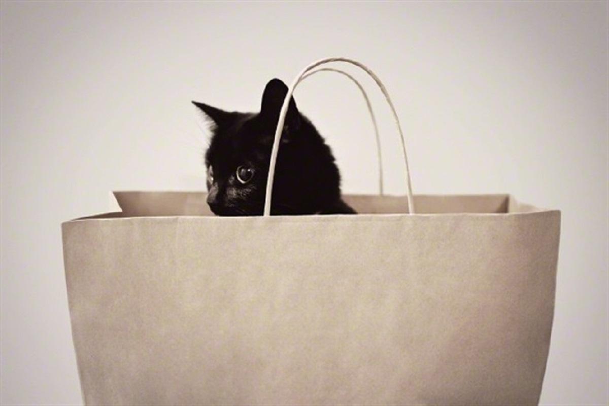 gatto nascosto in un sacchetto