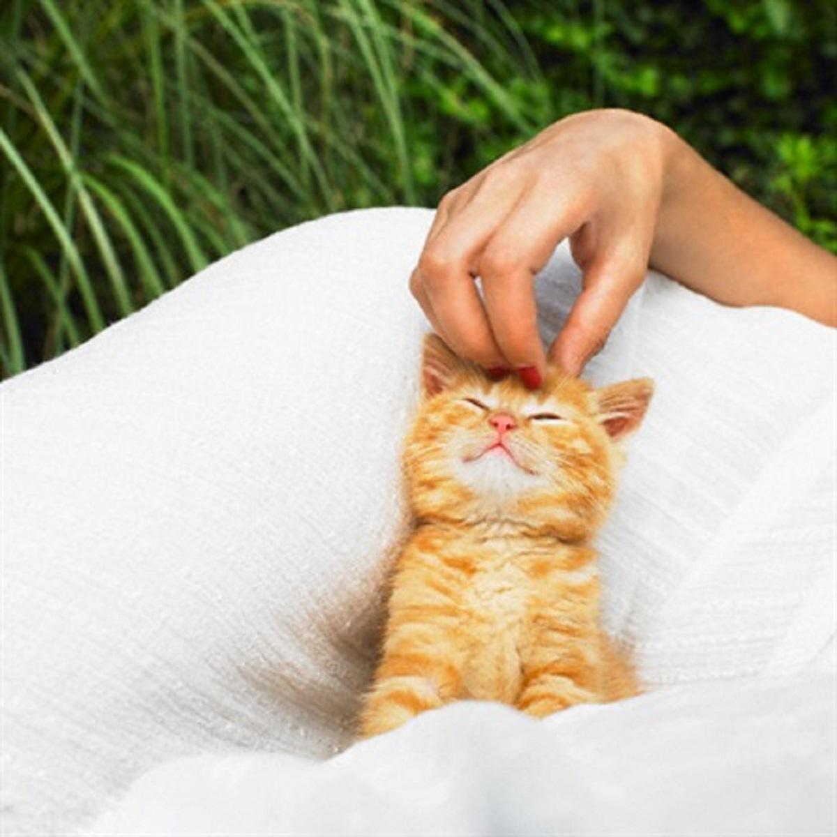 gattino accarezzato sulla testa