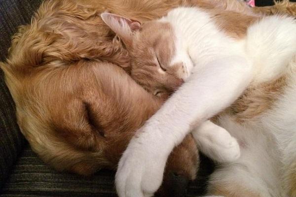 gatto e cane che dormono
