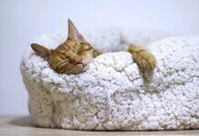 razze-gatti-tranquilli