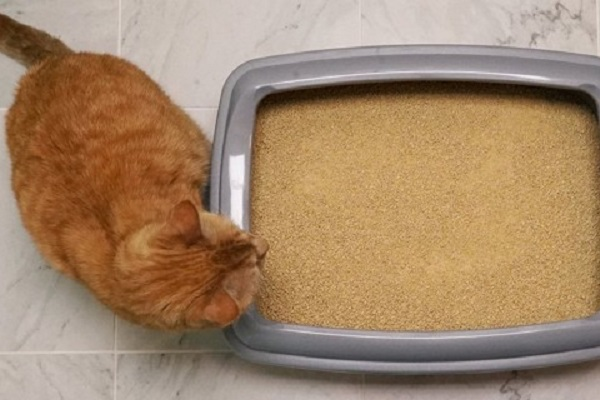 sabbia per gatto ecologica