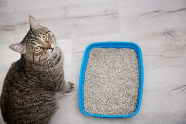 gatto vicino a lettiera