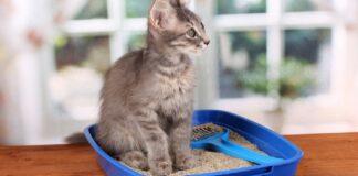 gatto nella lettiera