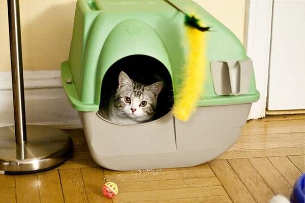 gatto in lettiera chiusa