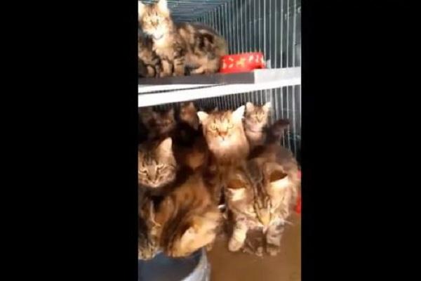 gatti denutriti dentro kennel