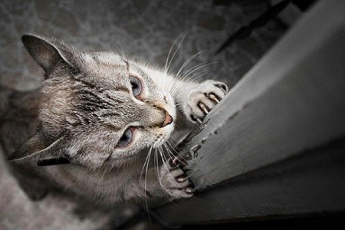gatto graffia parete