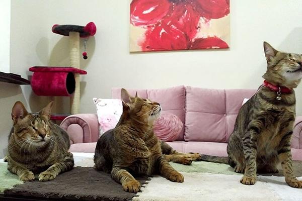 Tre gatti ciechi