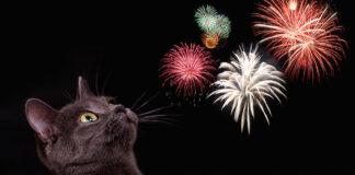 Gatto ha paura dei fuochi d'artificio