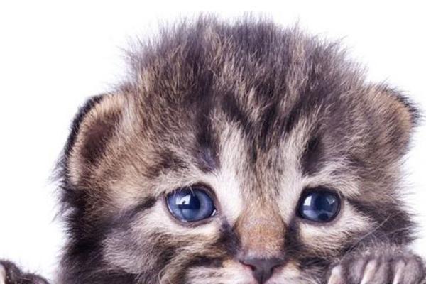Gattino spaventato