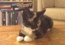 Il gattino Scout