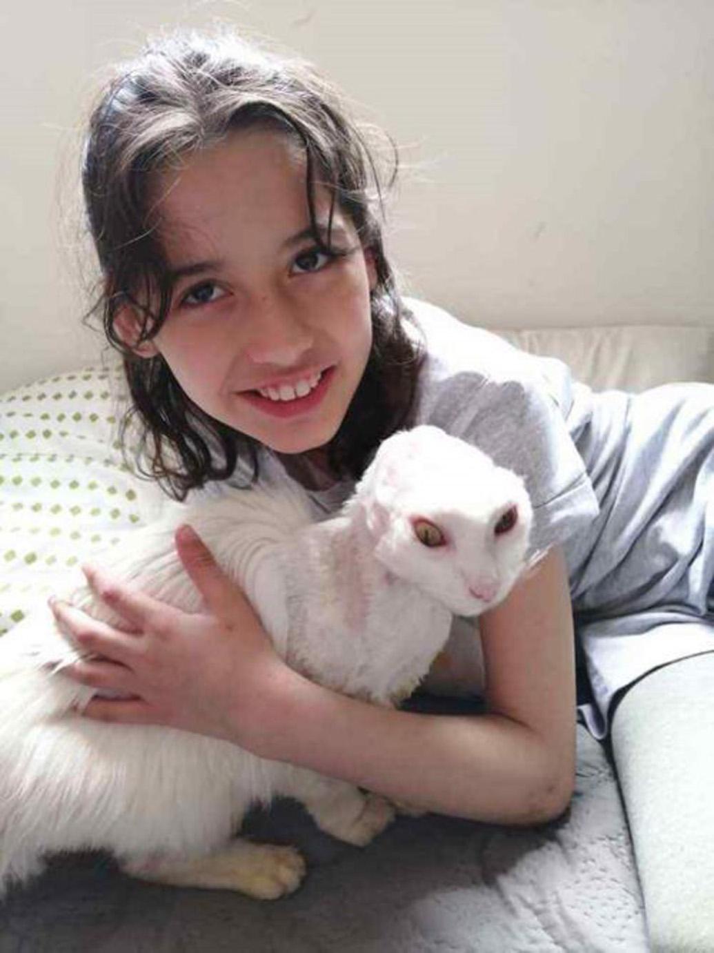 Il gatto Carlota