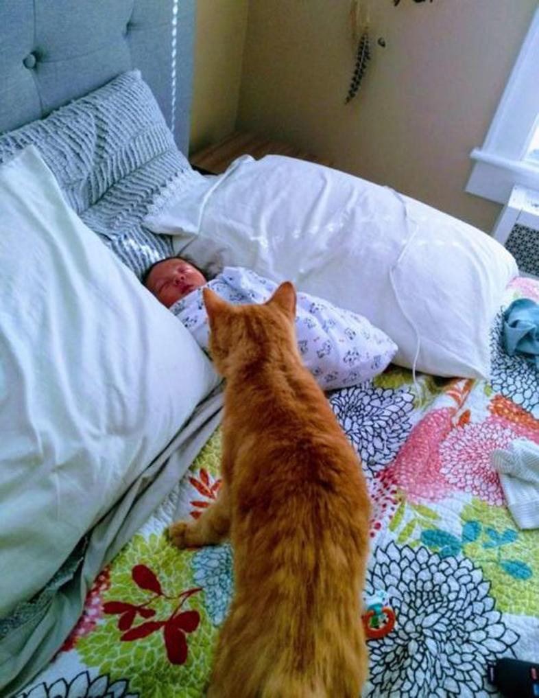 Il gatto Cat