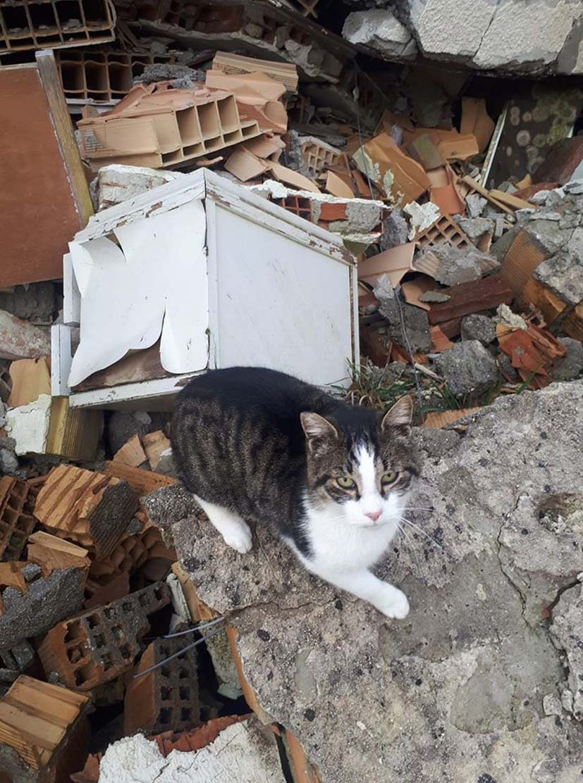 Il gatto Giovannino