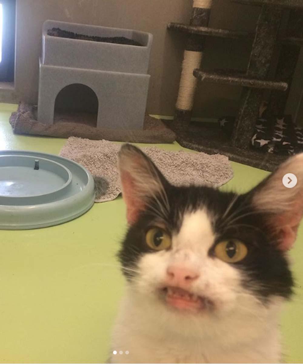 La gattina Nala