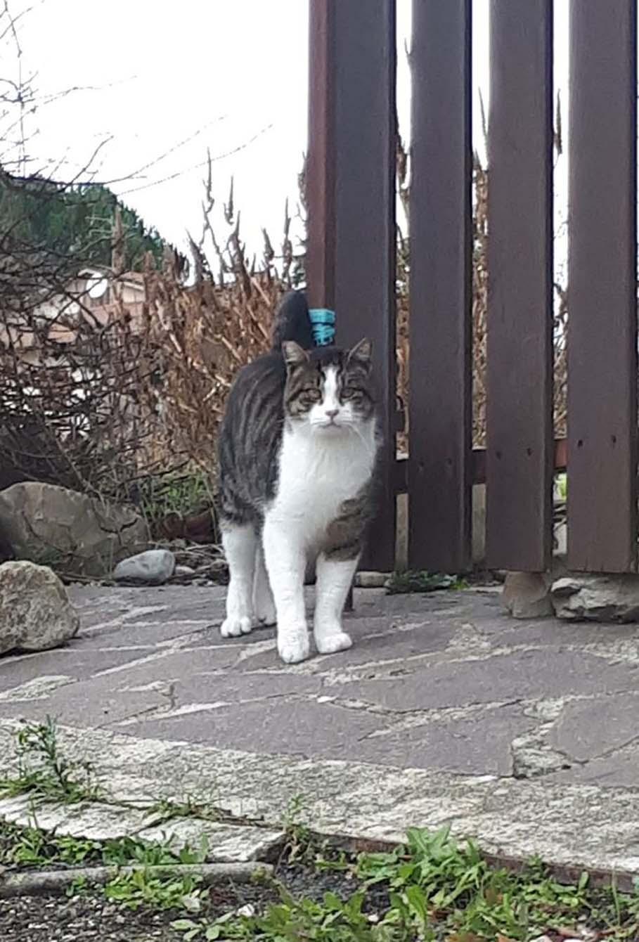 La storia del gatto Giovannino