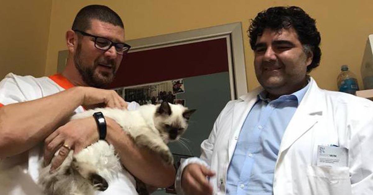 Gatto con due dottori