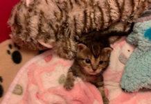 Storia della gattina Oatmeal