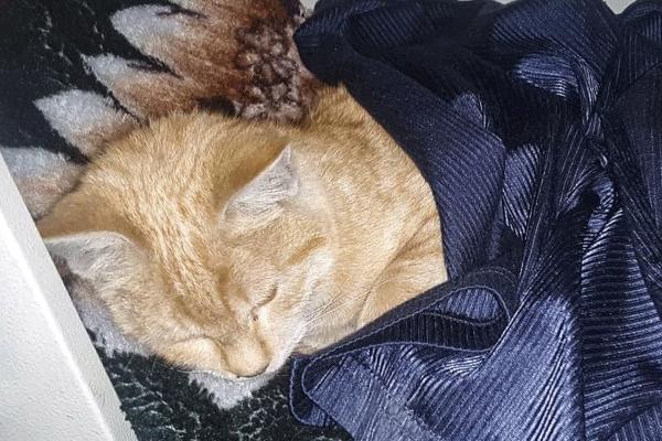 Gatto che dorme
