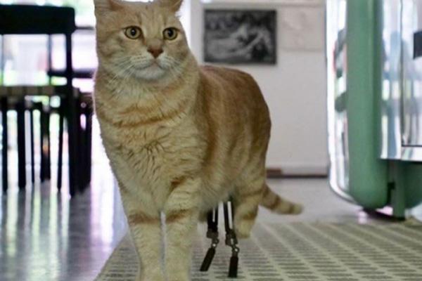 Gatto con zampe bioniche