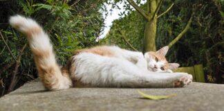 Gatto e coda