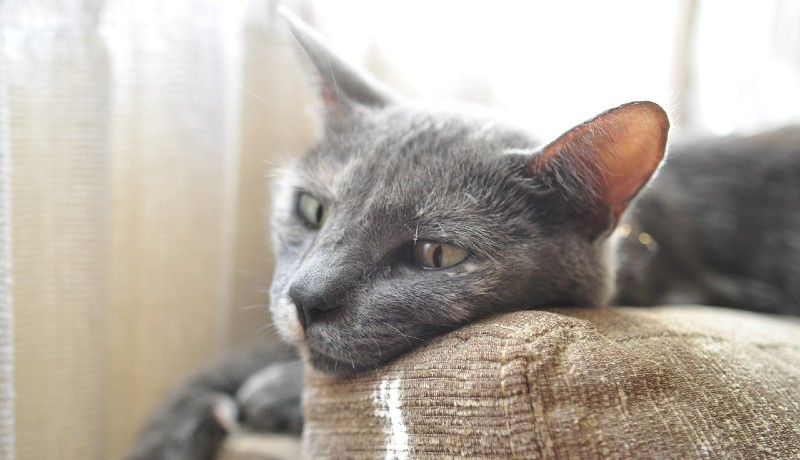 Gatto sul divano