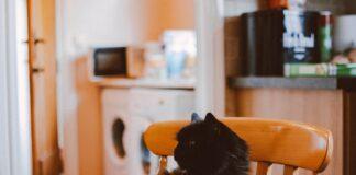 cibo-gatti-fatti-in-casa