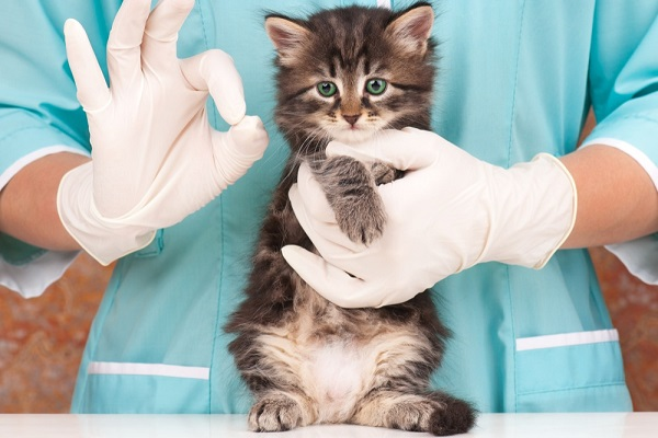 gatto e veterinario