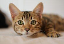 comportamenti-strani-gatti