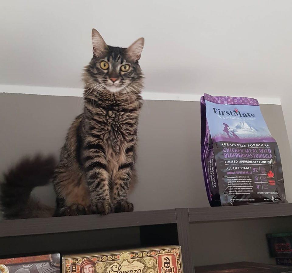 crocchette-gatto-Gimmy