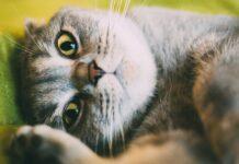 frasi-sui-gatti