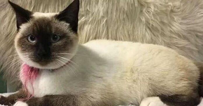 gattina abbandonata con messaggio di speranza